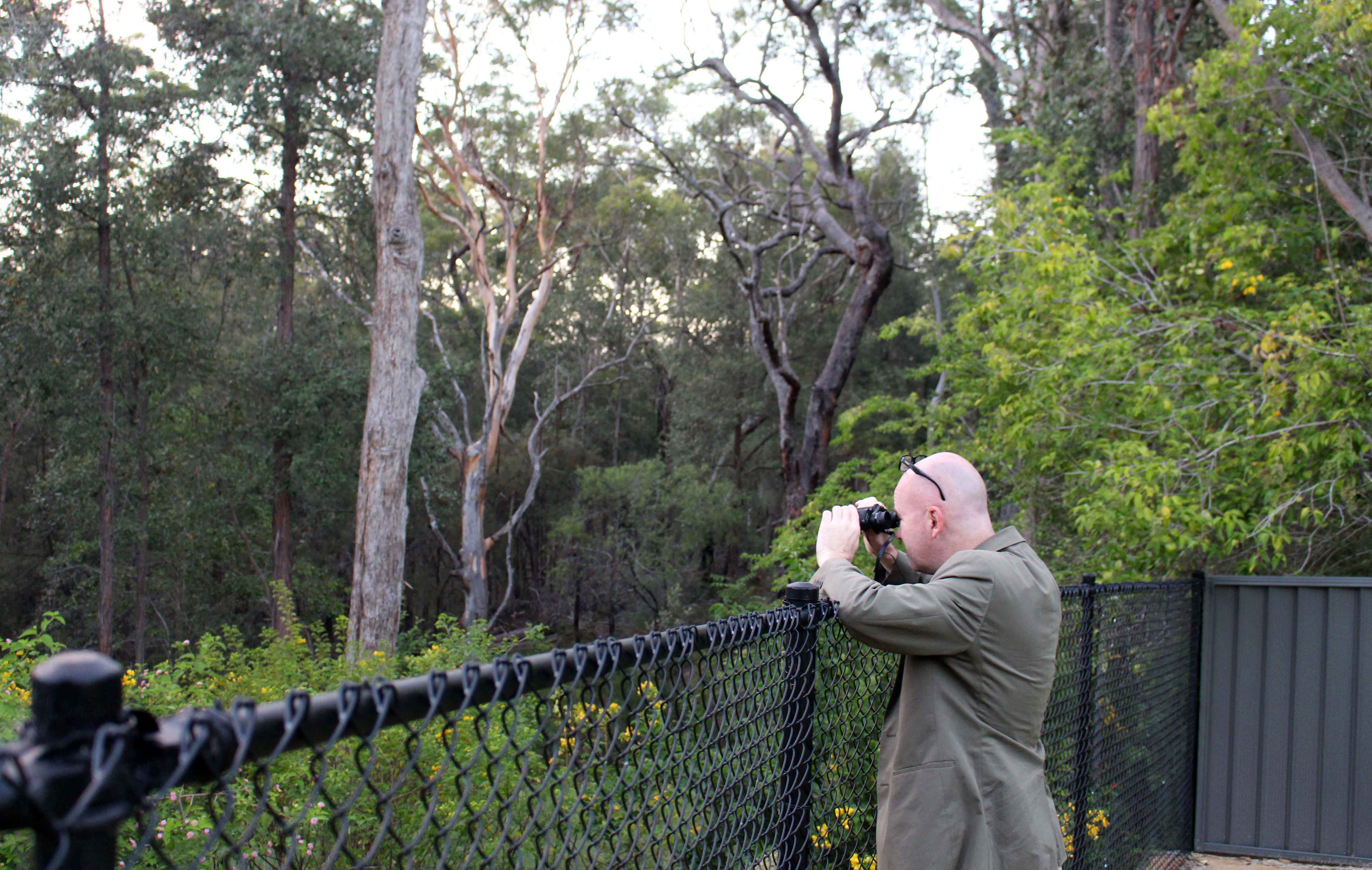 Blue Mountains Fauna Project | bmcc nsw gov au