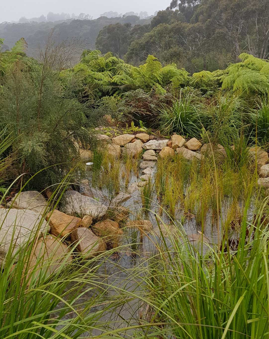 Stormwater-treatment-structure-above-Wentworth-Falls-Lake-swamp.jpg